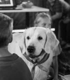Netradiciniam ugdymui pasitelkiami šunys
