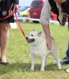 Sausio 30 d. vyks bandomasis šunų testavimas