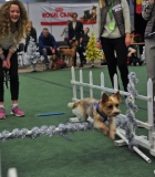 """""""Olimpinėje trasoje"""" šunys demonstravo miklumą"""