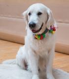 Vaikai ir terapiniai šunys susitinka veikti, mokytis ir patirti