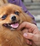 Fotografavimas: pataria šunų elgsenos specialistas
