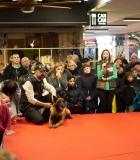 Šiauliečiai išsiilgę renginių su šunimis