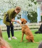Terapija su šunimis SOS vaikų kaime tęsis ir toliau