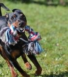Šuns mokymas: koks būdas geriausias?