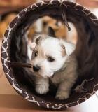 Kinologai pasisako už visuotinį gyvūnų ženklinimą ir registravimą