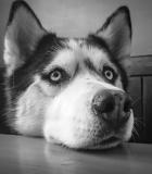 Šuo įkyriai skalija: kaip to išvengti?