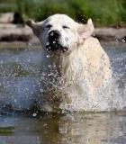 Šuniui gyvybiškai svarbu – vanduo!