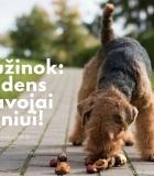 Atėjo ruduo: kokios gamtos gėrybės pavojingos šuniui?