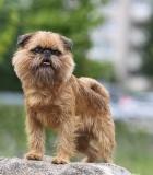 Kastracija mažina beglobių skaičių ir saugo gyvūnų sveikatą