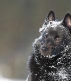 Šunų priežiūra atėjus žiemai