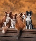 Ar užtikrinate penkias gyvūnų laisves savo augintiniams?