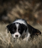 Šuniuko socializacija: kodėl? kada? kaip?