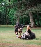 Lietuvos gyventojai prioritetą teikia šunims