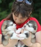Gyvenimas su šunimis: svajonių išsipildymas