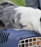 Nauja šunų gabenimo tvarka