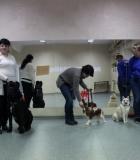 Prasidėjo parengiamieji kursai šunims ir jų vedliams