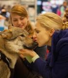 Kaip valdyti šuns emocijas?