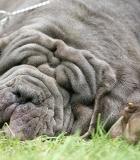 Sugriežtinta atsakomybė už žiaurų elgesį su gyvūnais