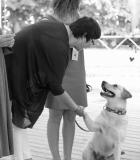 """Pirmajai šunų """"laidai"""" įteikti Kaniterapijos asociacijos pažymėjimai"""