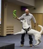 Fizinė prievarta prieš gyvūną – tai ne gyvūno mokymas
