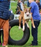 """Seminaras """"Šuns motyvacija: resursai ir bendravimas"""""""