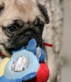Privalomas gyvūnų ženklinimas didintų savininkų atsakomybę
