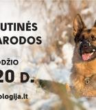 Į tarptautines parodas atvyksta 1800 šunų!