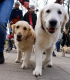 Vilnius kitaip: ekskursijos šuniškų pėdučių takais