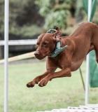 Šunys varžėsi jėgos sporto varžybose