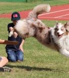 Šunys + Rotary vasara vaikams