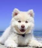 """Neturintis kilmės dokumentų """"nori tapti"""" veisliniu šunimi"""
