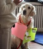 Terapiniai šunys: nematomo fronto eiliniai