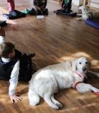 Šunys padeda vaikams pritapti gyvenime ir mokykloje